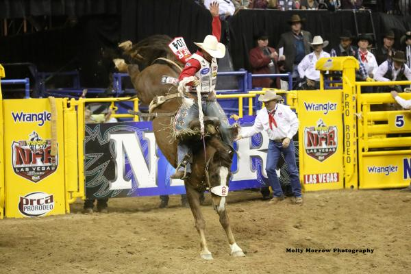 Peterson ranch headed for National Finals Rodeo